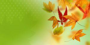 All Clear Leafguard FAQ Banner Autumn Leaves