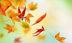 All Clear Autumn Leafguards