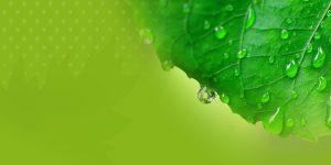 All Clear Leafguard FAQ Banner Green Rainfall